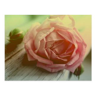 Vintage rosa Rosen-Blumen-Blumenpostkarte Postkarten