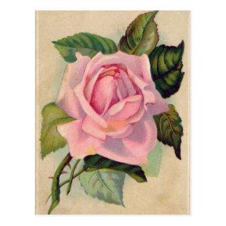Vintage rosa Rosen-Postkarte Postkarte