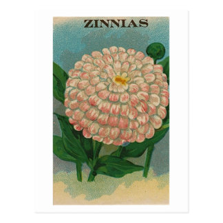 Vintage rosa Zinniasamen-Paketpostkarte Postkarte