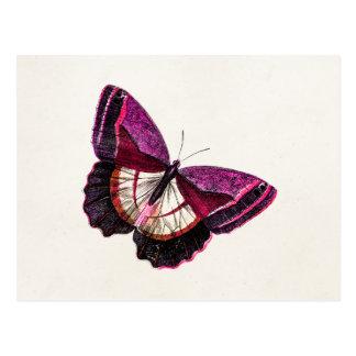 Vintage rosarote leere Schablone des Postkarte