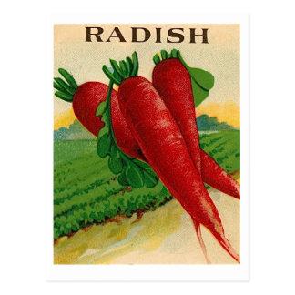 Vintage Samenpaketpostkarte des roten Rettichs Postkarte