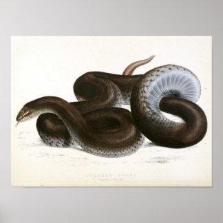Vintage Schlange, die - Schwarz-Afrikanisch zeichn Poster