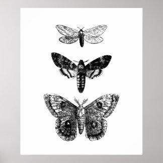 Vintage Schmetterlinge Poster