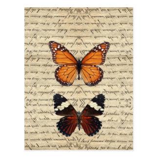 Vintage Schmetterlingssammlung Postkarte