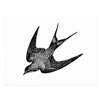 Vintage Schwalben-Illustration - Retro Vögel Postkarten