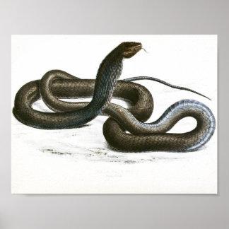 Vintage schwarze Kunst König-Kobra Poster
