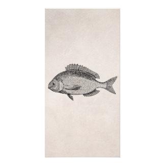 Vintage Seebrachsen-Fisch-Retro Fisch-Pergament Fotokartenvorlage