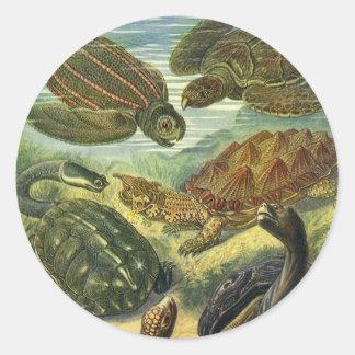 Vintage Seeschildkröte-Land-Schildkröte durch Runder Aufkleber