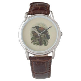 Vintage Vögel der Wissenschafts-NZ - Pferd-Uhr Uhr