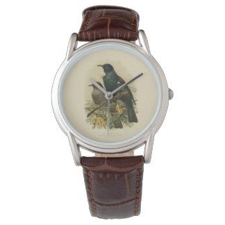 Vintage Vögel der Wissenschafts-NZ - Tui-Uhr Uhr