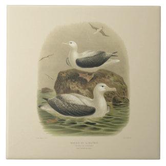 Vintage Vögel der Wissenschafts-NZ - wandernde Fliese