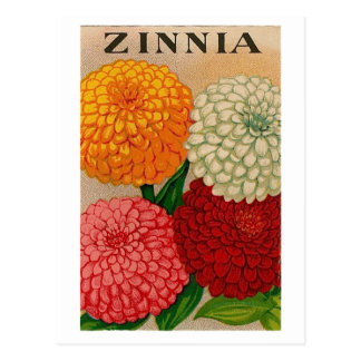 Vintage Zinniasamen-Paketpostkarte Postkarte