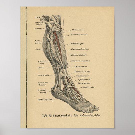 Vintager 1888 Deutsch-Anatomie-Druck-Bein-Fuß Poster | Zazzle.ch