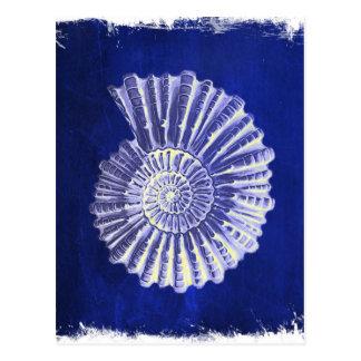 Vintager botanischer blauer weißer Küstenseashell Postkarte