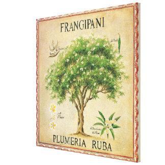 Vintager botanischer Plumeria-Baum-Kunst-Deko Gespannte Galerie Drucke