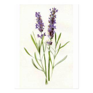 Vintager Lavendel Postkarte