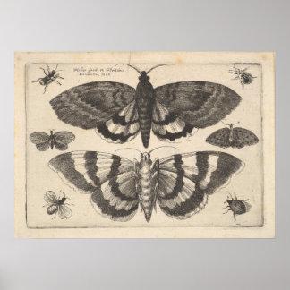 Vintager Mottelepidoptera-Kunst-Druck (64) Poster