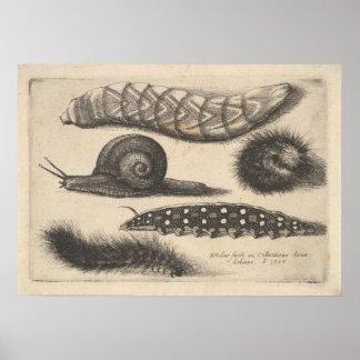 Vintager Raupen-Schnecke-Insekten-Natur-Druck (56) Poster