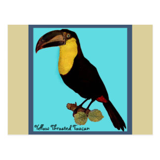 VINTAGER VOGEL, YELLOW-THROATED TOUCAN POSTKARTE