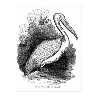 Vintager weißer Pelikan Postkarte