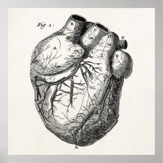 Vintages 1800s Herz-Retro Herzanatomie-Herzen Poster