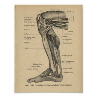 Vintages 1888 Deutsch-Anatomie-Druck-Bein-Knie Poster