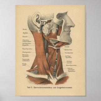 Vintages 1888 Deutsch-Anatomie-Druck-Gesicht und Poster