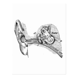 Vintages Anatomie-Trommelfell-Gehörgang-Diagramm Postkarte
