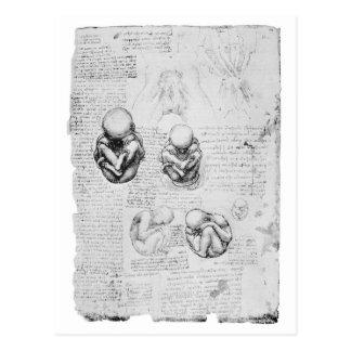 Vintages Anatomiezeichnen eines Fötusses Postkarte