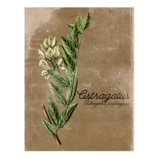 Vintages Art-Astragal-Blumen-Kraut Postkarte