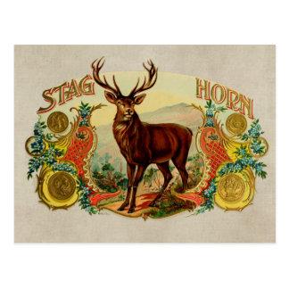 Vintages Hirsch-Horn Postkarte
