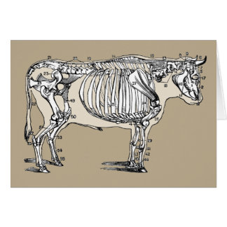 Vintages Kuh-Skelett Karte