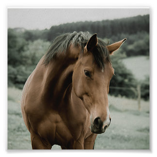 Vintages Pferdetiermalereikunst Photographie