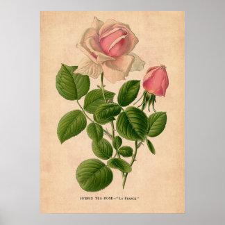 Vintages Rosen-Druck-Plakat Poster