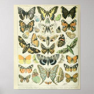 Vintages Schmetterlingsplakat Poster