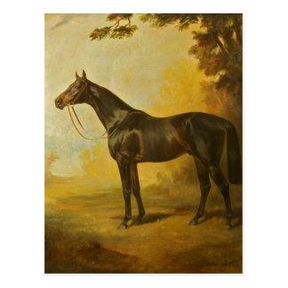Vintages Thoroughbred-Pferd Postkarte