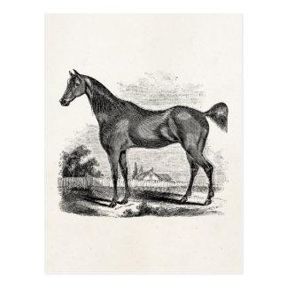 Vintages Thoroughbred-Pferdereiterpersonalisiertes Postkarte