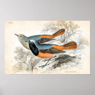 Vintages Vogel-Plakat Poster