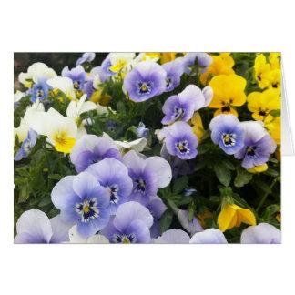 Viola im Garten von Villa di Poggio ein Caiano Karte