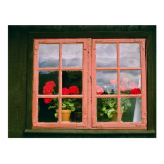 Violette Pelargonien im Fenster von einem Postkarte