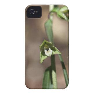 Violetter Helleborine (Epipactis purpurata) iPhone 4 Etuis