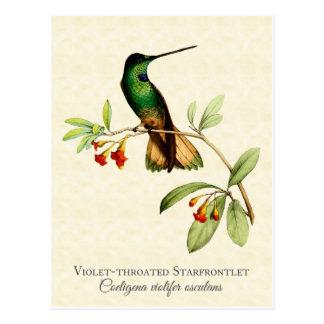 Violetter Throated Kolibri-Vintage Kunst Postkarte