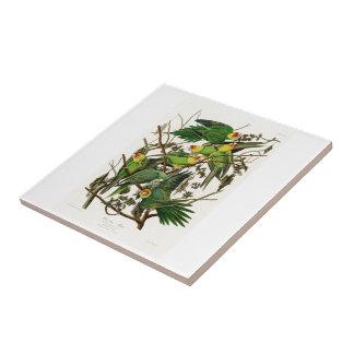 Vögel Carolina-Papageien-Johns Audubon von Amerika Kleine Quadratische Fliese