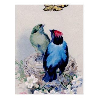 Vögel in der Nestpostkarte Postkarte