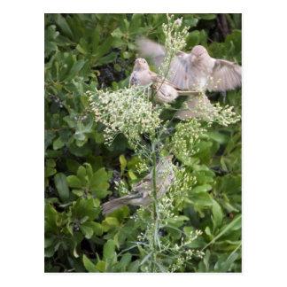 Vögel u. Pflanzen Postkarte