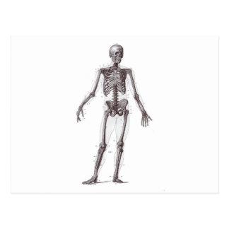 Volles Skelett Postkarte
