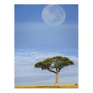 Vollmond über Akazienbäumen, Masais Mara, Postkarte
