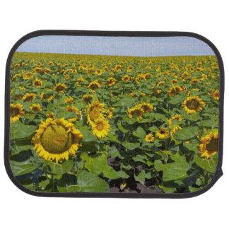 WA, Kittitas County, Sonnenblume-Feld Autofußmatte