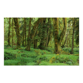 WA, olympisches NP, Quinault Regen-Wald, Moos Poster