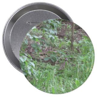 Wachteln Runder Button 10,2 Cm